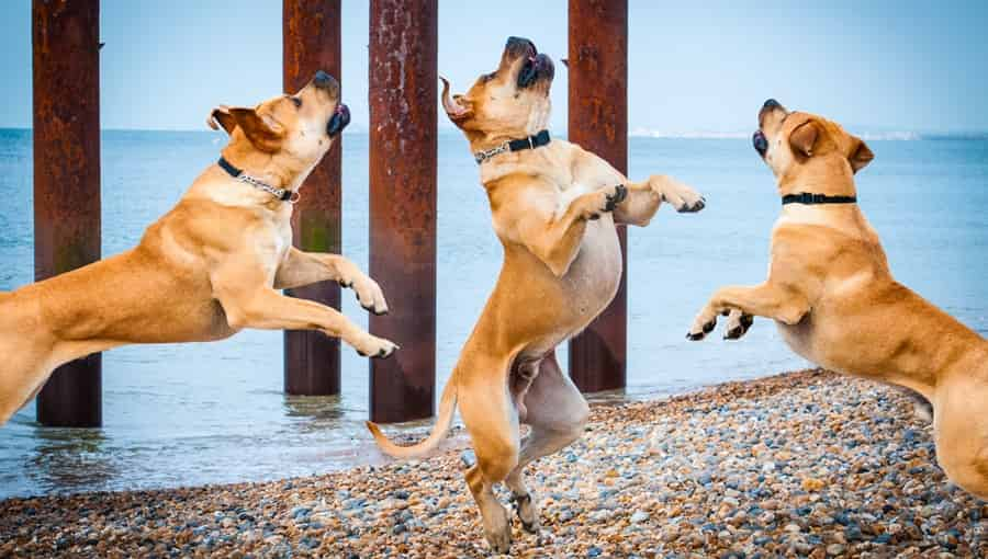 Jumping Dogs