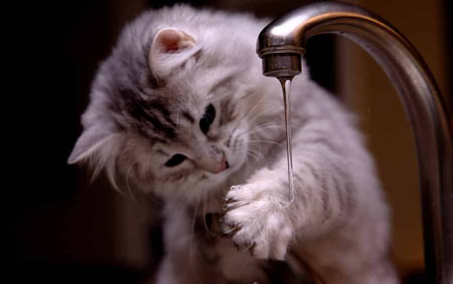 kitten_and_faucet_no__3_by_mischi3vo_0
